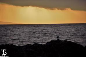 Abendstimmung an der Westküste (Regen über Skye)
