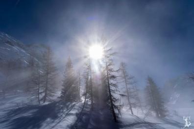 Grandiose Lichtstimmung an der Nebelgrenze