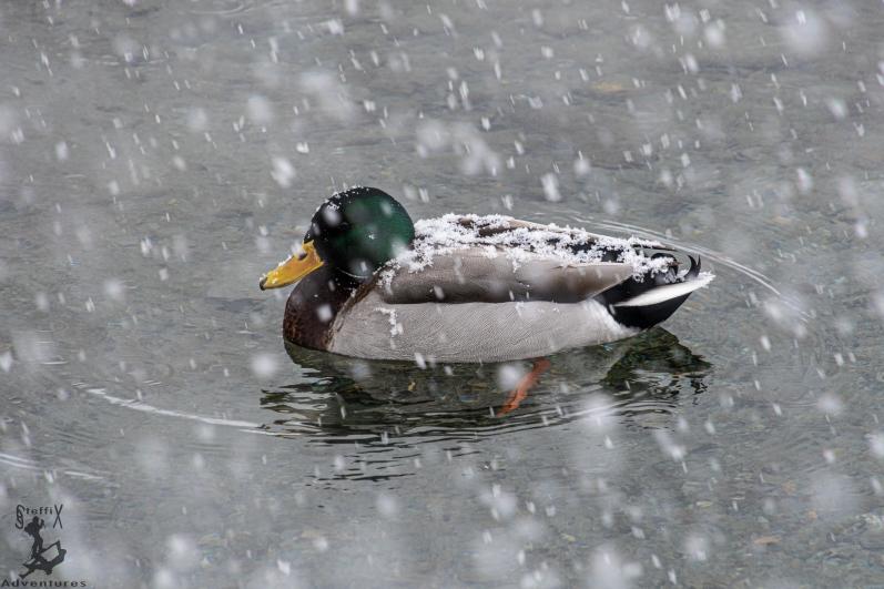 Selbst der Ente war der Aufstieg zu nass